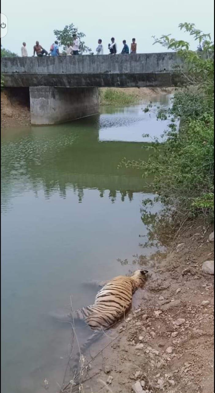MP Tigers